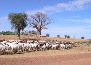 Le développement rural intégré